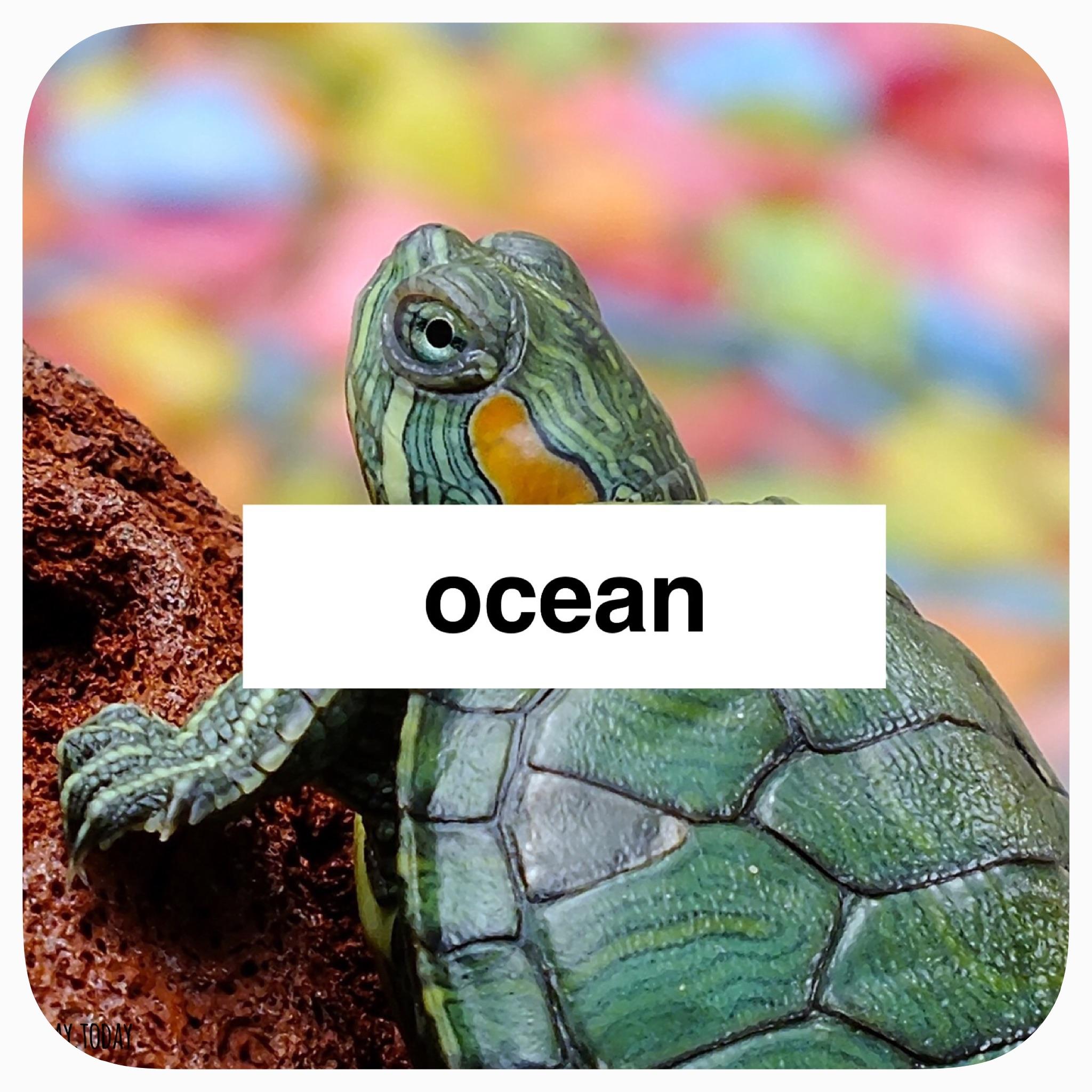 ocean thematic study