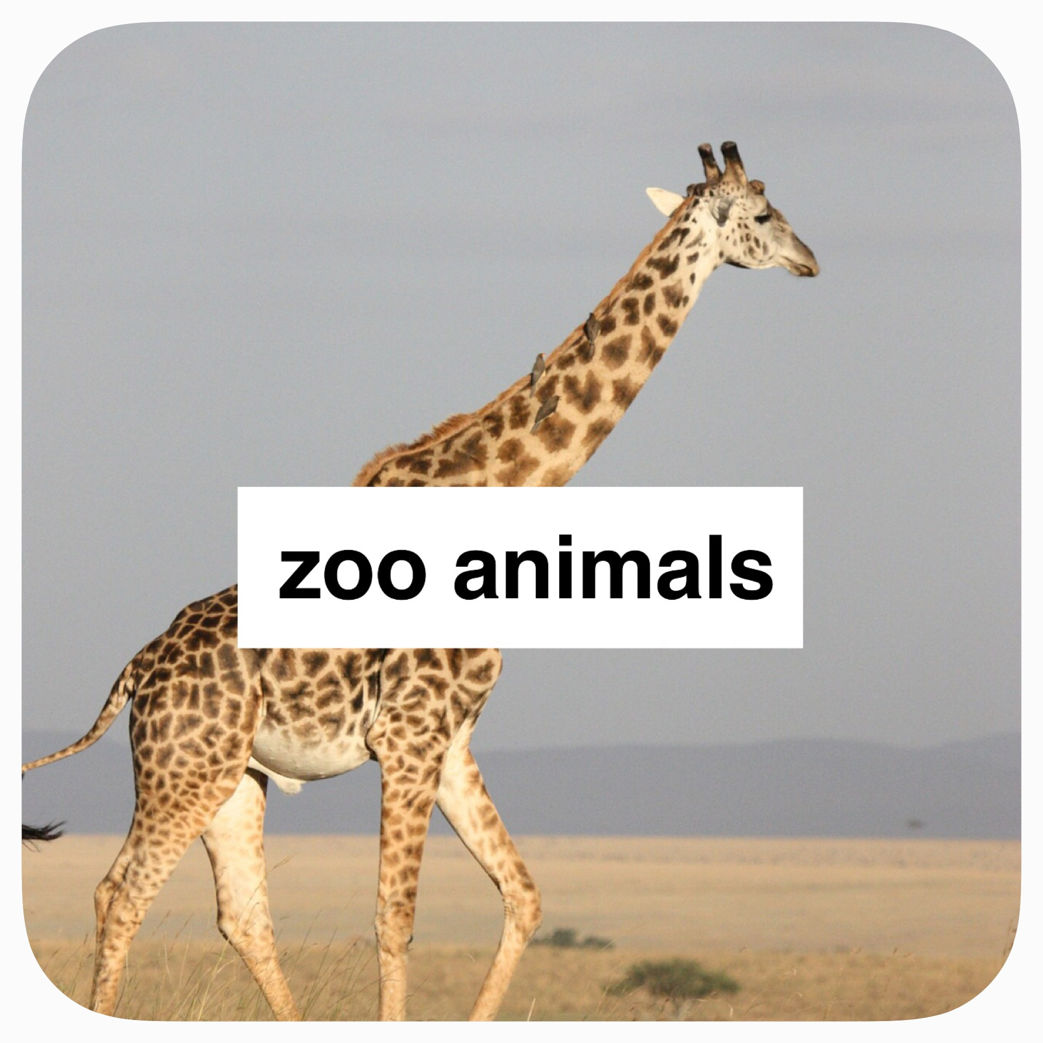 thematic study on zoo animals