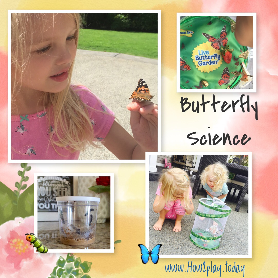 Studying Butterflies with this Butterfly Lore kit