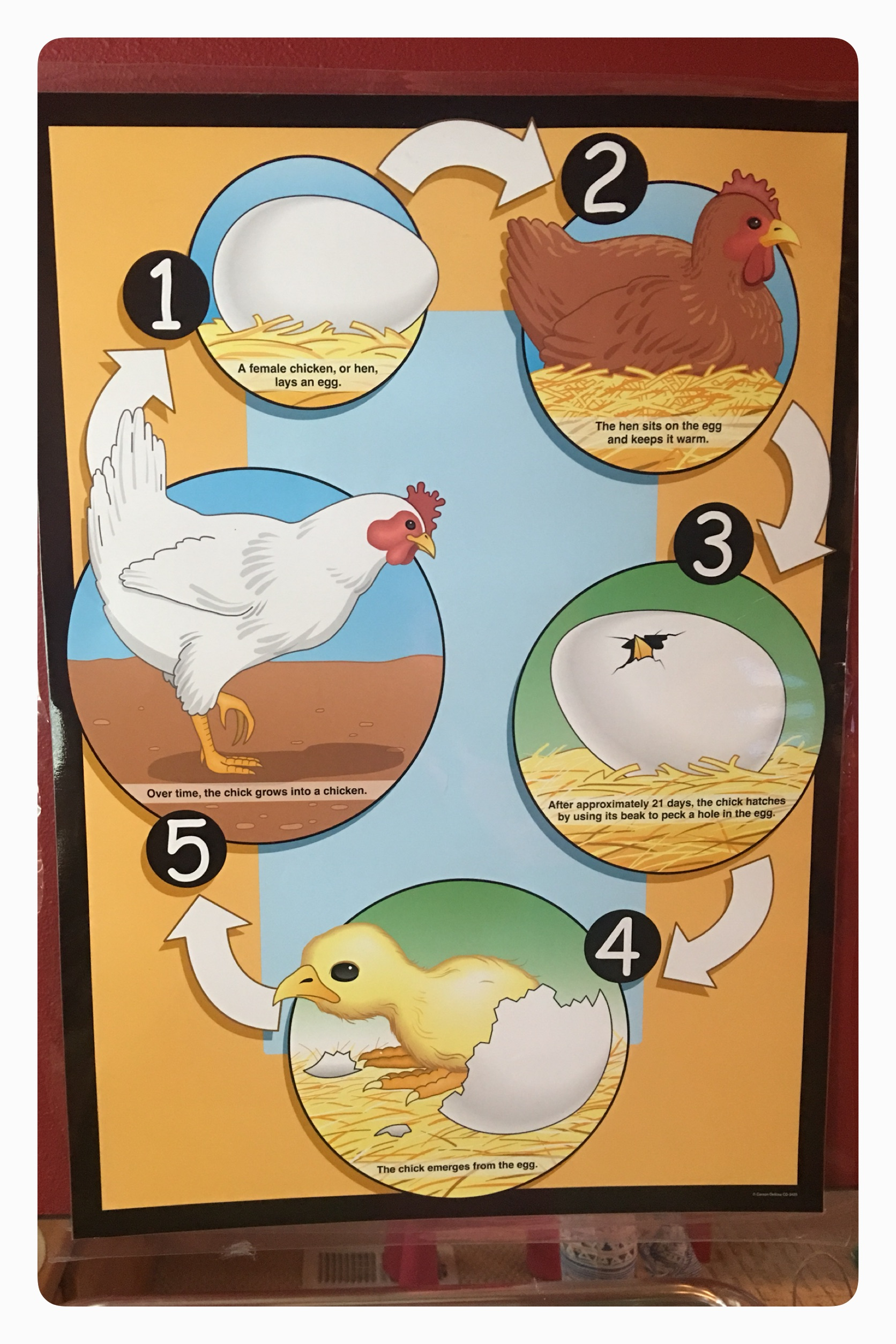 Baby Birds: thematic study on baby birds/ baby animals by How2play.today